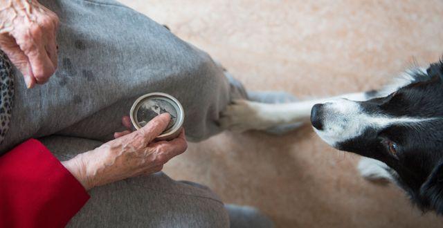 Vårdhund på äldreboende.  Erik Nylander/TT / TT NYHETSBYRÅN