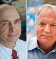 Charles M. Rice, Harvey J Alter och Michael Houghton. årets pristagare i fysiologi och medicin.  TT