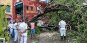 Lokalbor och poliser arbetar med ett träd som fallit över en elledning i Calcutta. STR / TT NYHETSBYRÅN