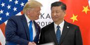 Trump och Xi. Susan Walsh / TT NYHETSBYRÅN/ NTB Scanpix