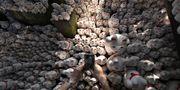 Tusentals lyckokatter står i långa rader i det buddhistiska templet Gotokuji i Tokyo. TT Nyhetsbyrån