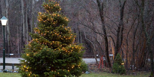 Liseberg redo för årets jul – med fem miljoner juleljus Omni