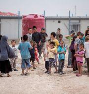 Al-hol-lägret. Baderkhan Ahmad / TT NYHETSBYRÅN