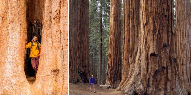 Världens högsta träd finns i skogarna runt San Francisco. Thinkstock