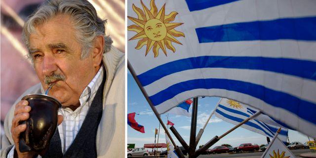 Fri abort kvar i uruguay