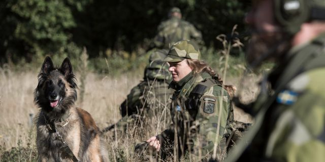 Arkivbild. Mattias Nurmela/Forsvarsmakten