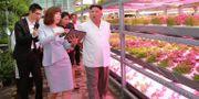 Bilden uppges visa hur Kim Jong-Un besöker ett institut för lantbruksinnovation i Peking under sin Kinaresa i juni. KCNA VIA KNS