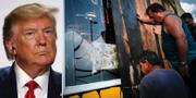 Donald Trump/Två män täcker för fönsterrutor i Puerto Rico när stormen Dorian närmar sig. TT