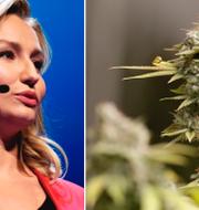Ebba Busch Thor och en marijuana-planta. TT