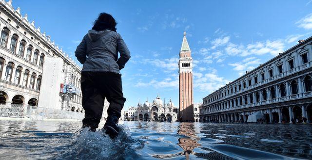 Markustorget i Venedig.  FLAVIO LO SCALZO / TT NYHETSBYRÅN