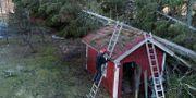 Hus drabbade av Alfrida. Anders Wiklund/TT / TT NYHETSBYRÅN