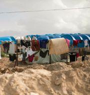 al-Hol-lägret i Syrien, där IS-medlemmar hålls fångna. Maya Alleruzzo / TT NYHETSBYRÅN