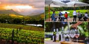 Sydafrika har mycket mer att erbjuda än stränder och Godahoppsudden. Wine Tram / Rickety Bridge