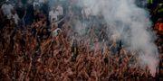 Lazio-fans. FILIPPO MONTEFORTE / AFP