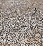 Uttorkad åkermark i Indien. Ajit Solanki / SCANPIX