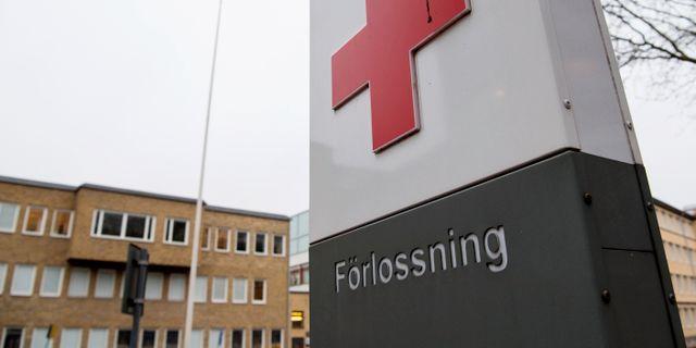 Sus i Malmö.  Johan Nilsson/TT / TT NYHETSBYRÅN