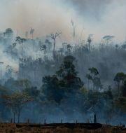 Brand i regnskogen. Leo Correa / TT NYHETSBYRÅN