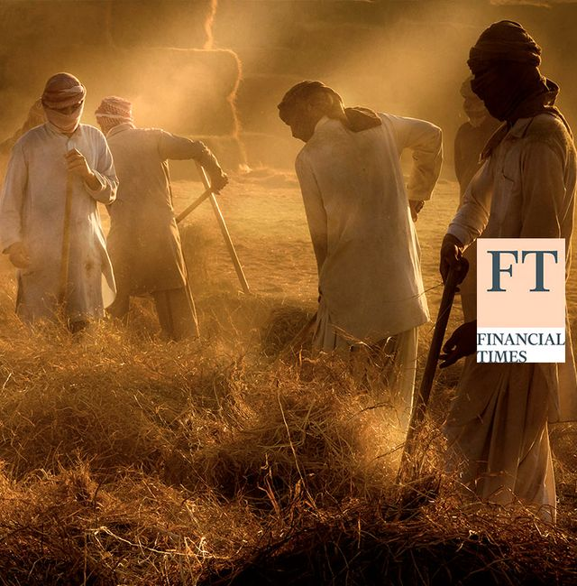 Al Faqa, United Arab Emirates, haystack workers. Shutterstock