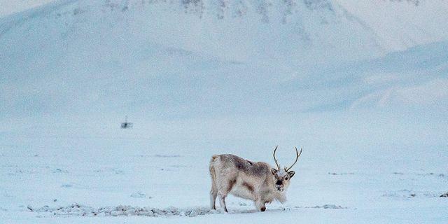 Svalbard. Jonas Ekströmer/TT / TT NYHETSBYRÅN