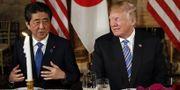 Arkivbild: Trump och Abe i Mar-a-Lago, Florida. TT
