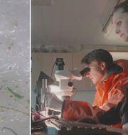 Forskare undersöker isen på Arktis. TT