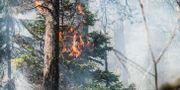 Arkivbild, skogsbrand. Tomas Oneborg/SvD/TT / TT NYHETSBYRÅN