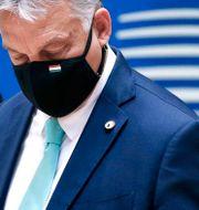 Premiärminister Viktor Orbán/Arkivbild. Francois Lenoir / TT NYHETSBYRÅN