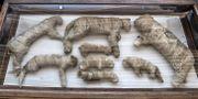 Mumifierade lejonungar. KHALED DESOUKI / AFP