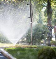 En vattenspridare vattnar en park i Enköping. Fredrik Sandberg/TT / TT NYHETSBYRÅN