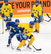 Damkronorna tränar i Falun ifjol. DANIEL ERIKSSON / BILDBYRÅN