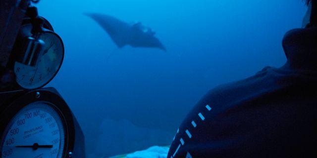 En undervattensbild från Seychellerna.  David Keyton / TT NYHETSBYRÅN