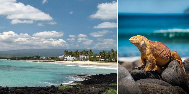 Galapagosöarna får snart sitt första hotell. Anne & David Wikicommons / Simon Matzinger Pexels
