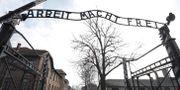 Arkivbild på koncentrationslägret Auschwitz-Birkenau. Michael Sohn / TT NYHETSBYRÅN/ NTB Scanpix