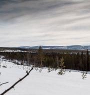 CARL-JOHAN UTSI / TT / TT NYHETSBYRÅN
