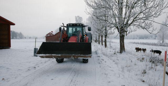 Adam Arnesson i traktorn på Jannelunds Gård.  Oatly