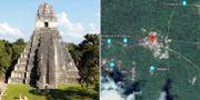 En av de tidigare kända pyramiderna i Tikal/Satellitbild över området från Google.  TT/Google Maps