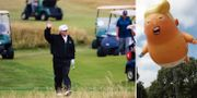 Donald Trump på golfbanan/Donald Trump-ballongen som används för att demonstrera mot den amerikanske presidenten. TT