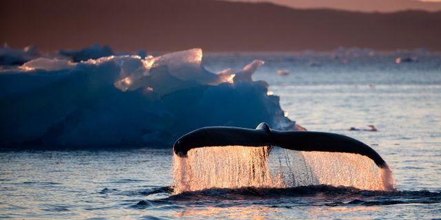 Havet utanför Grönlands kust, arkivbild. David Goldman / TT NYHETSBYRÅN/ NTB Scanpix