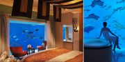 65 000 fiskar finns i tanken utanför hotellfönstret på Atlantis i Dubai. Atlantis