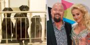 Anders Bagge och Johanna Lind Bagge vill adoptera en av försökshundarna. Hundarna på bilden deltog i experiment som universitetet gjorde 2012 och lever inte längre.  Mathilda Andersson  Nwachukwu / Spionen