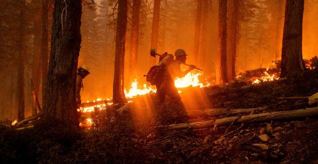 Brandman i skogsbränderna i Kalifornien. Noah Berger / TT NYHETSBYRÅN