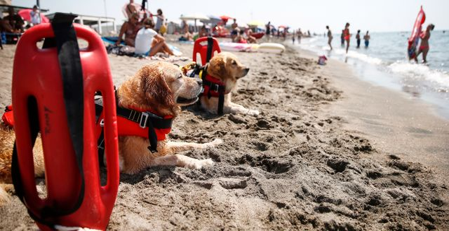 Räddningshundar på stranden Ostia utanför Rom/Illustrationsbild. Hundarna på bilden är inte samma som de som nämns i texten.  Cecilia Fabiano/ LaPresse / TT NYHETSBYRÅN