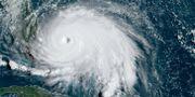 Satellitbild över Dorian. NOAA / NOAA/RAMMB