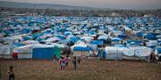 Ett temporärt flyktingläger i den irakiska staden Irbil i november 2015. Seivan M.Salim / TT NYHETSBYRÅN