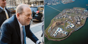 Harvey Weinstein/Rikers Island TT