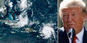Orkanen Dorian/Donald Trump. TT