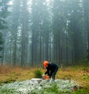 Skogsarbetare/Illustrationsbild Grøtt, Vegard Wivestad / TT NYHETSBYRÅN