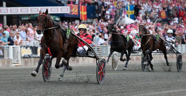 Bold Eagle med kusken Frank Nivard under förra årets tävling.  Sören Andersson/TT / TT NYHETSBYRÅN