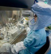 Personal vid vaccintillverkaren Biontechs anläggning i Tyskland. Michael Probst / TT NYHETSBYRÅN