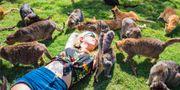 Lanai Cat Sanctuary är ett stort utomhusområde där katterna kan springa, leka och sova hela dagarna – ett riktigt kattparadis. Lanai Cat Sanctuary